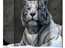 Paraván - Bengali tiger in zoo II [Room Dividers]